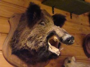 Musée de la Forêt - Boar
